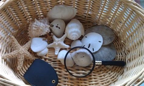 preschool science lesson nature observation baskets woo