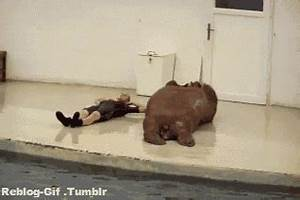 Funny Gif Fail GIF - Find & Share on GIPHY