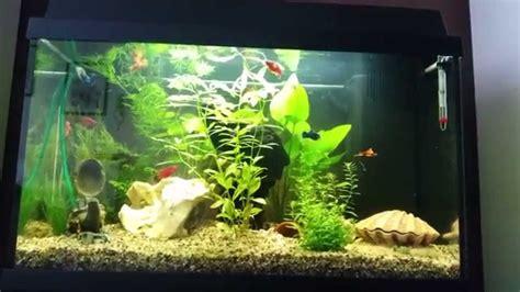 fische für 60 liter aquarium fische aquarium 60 l ribice