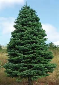 oregon christmas tree growers tree species oregon tree growers association