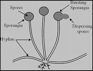How Does The Process Of Budding Differ From Spore