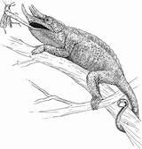 Coloring Chameleon Lizard Horned Basilisk Jackson Yuckles Reptile Jacksons Designlooter Drawings 720px 8kb 53kb 787px sketch template