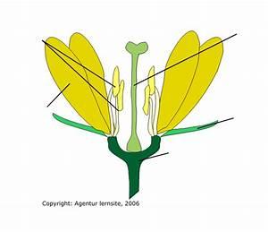 Aufbau Einer Blume : pin biene und blume malen nach zahlen ajilbabcom portal on pinterest ~ Whattoseeinmadrid.com Haus und Dekorationen