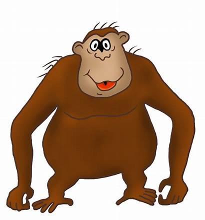 Funny Clipart Monkey Cartoon Gorilla Drawings Drawing