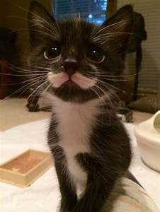 68 best Munchkin cats images on Pinterest | Animals ...
