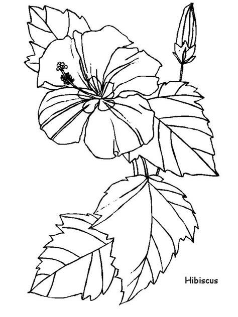 hibiscus flower  flower arrangement coloring page