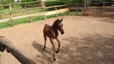 horses baby cute ponies
