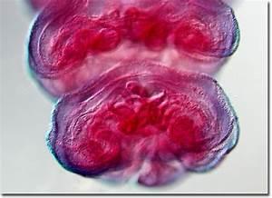 Molecular Expressions Microscopy Primer: Specialized ...
