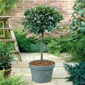 Pflanzen Luftreinigung Schlafzimmer : 7 zimmerpflanzen die den schlaf verbessern ~ Eleganceandgraceweddings.com Haus und Dekorationen
