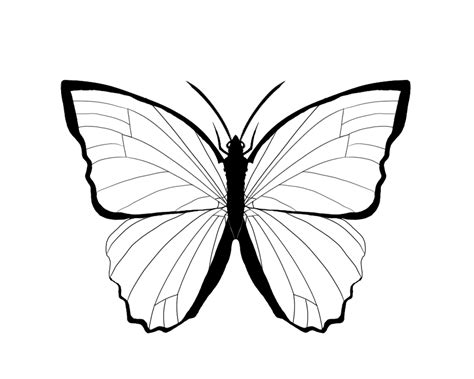butterfly outlines    clipartmag