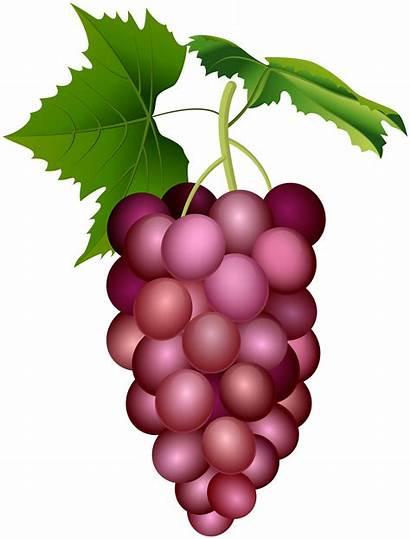 Grape Clip Clipart Grapes Purple Transparent Yopriceville