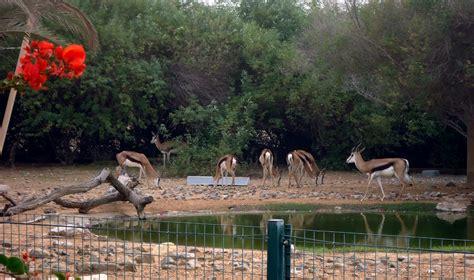 zoo dubai wildlife al ain