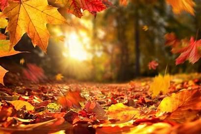 Autumn Leaves Kolpaper