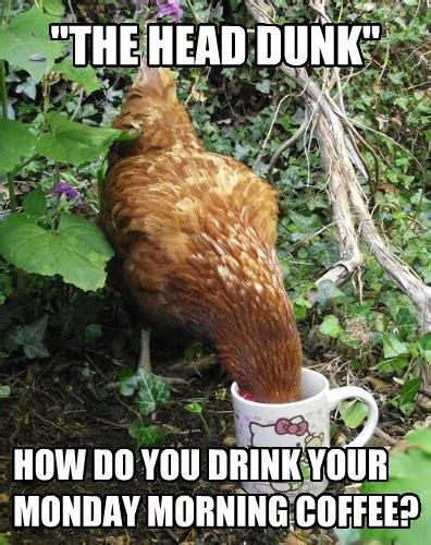 It is the best companion if you want some quality and time. Animal Capshunz - coffee - Funny animal pictures with ...