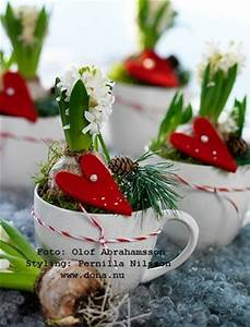 Hyacinths in a tea cup Gift Ideas Christmas Plant Gift
