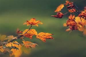 Schöne Herbstbilder Kostenlos : herbstbild kostenlos foto herbst gratis ~ A.2002-acura-tl-radio.info Haus und Dekorationen