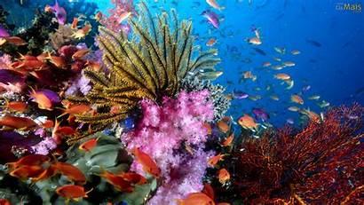 Mar Fundo Parede Papel Wallpapers Coral Osmais