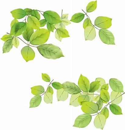 Leaf Freepngimg Hq