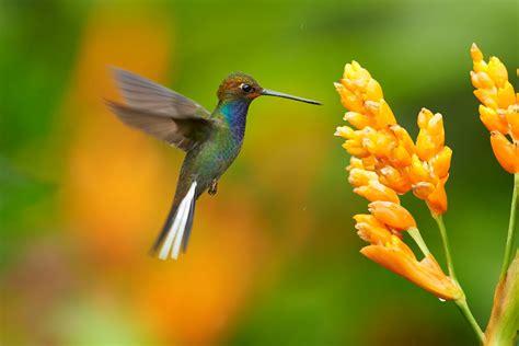 attracting hummingbirds  farm  green village