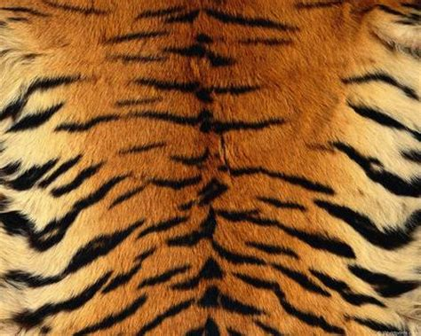 animal patterns textures abstract background