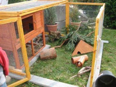 kaninchen außengehege selber bauen zwergkaninchen vom auk haltung garten