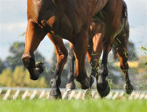 hindgut racehorses dysbiosis kelato manage posted september
