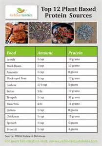 Top Plant Protein Sources