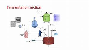 Ethanol Production From Molasses Slideshare