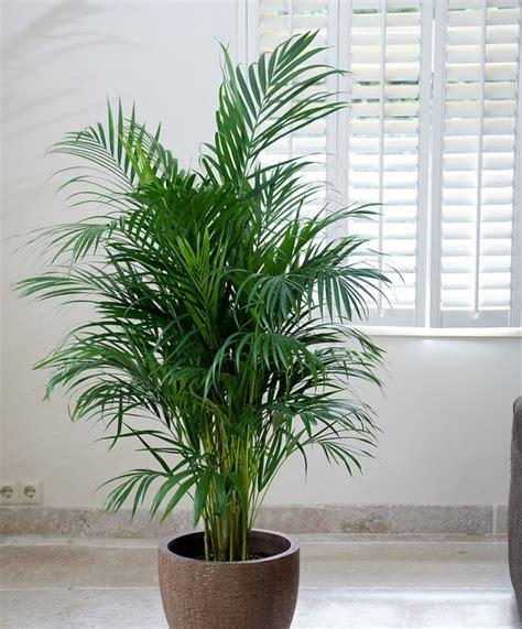 5 plantes à mettre dans la chambre pour passer une nuit