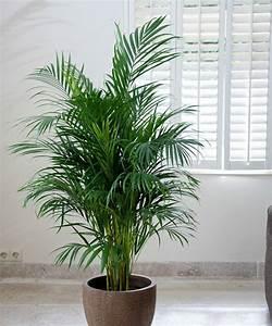 5 plantes a mettre dans la chambre pour passer une nuit With plante verte pour chambre a coucher