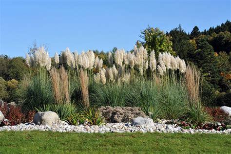 Hochwachsende Pflanzen Sichtschutz by Sichtschutz Im Garten 22 Raffinierte Ideen Anregungen