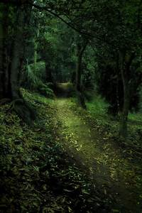 Enchanted Forest 4 by CathleenTarawhiti on DeviantArt