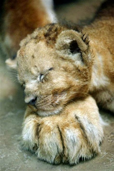 incredibly cute baby animal pictures   world