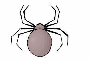 How to Draw a Simple Spider | DrawingNow