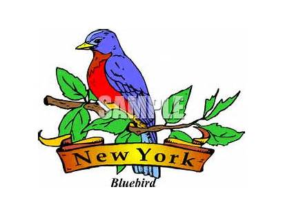 York State Bird Clipart Trivia Quizzes Geography
