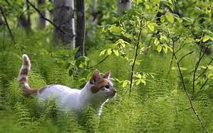 Nature, Forest, Cats, Animals, 1440x900, Wallpaper, High, Quality, Wallpapers, High, Definition, Wallpapers
