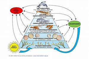 Ecology Unit Practice