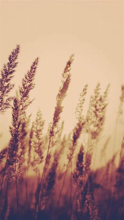Iphone Aesthetic Nature Wallpapers Backgrounds Field Blur