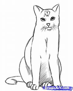 How To Draw A Realistic Cat Draw Real Cat Step By Step ...
