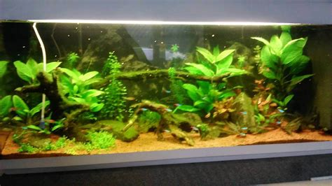quel n 233 on t5 choisir forum aquarium