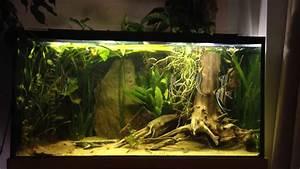 Holz Für Aquarium : 200l south america biotop aquarium youtube ~ A.2002-acura-tl-radio.info Haus und Dekorationen