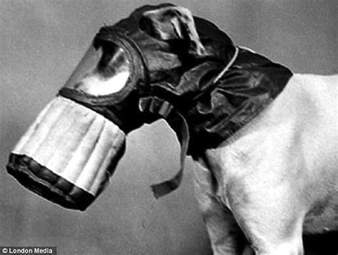 dogs  honor world war ii dogs shown  gas masks