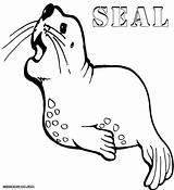 Seal Coloring Pages Sheet Fat Animal Print Colorings sketch template