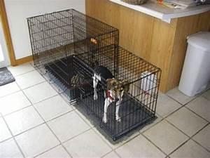 image gallery indoor dog bathroom With indoor dog bathroom