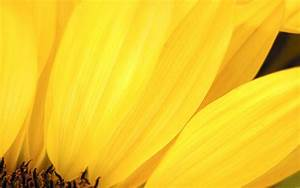 Cool Yellow Wallpapers - Wallpaper Cave