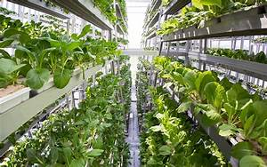Urban Gardening Definition : het nieuws van de vooruitgang verticale landbouw ommekeer voedselproductie het nieuws van de ~ Eleganceandgraceweddings.com Haus und Dekorationen