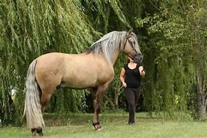 Dappled Sooty Buckskin Horses - Google Search | Buckskins ...