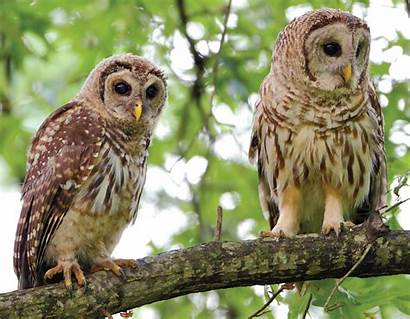 Animals Plants Mo Missouri Conservation Department