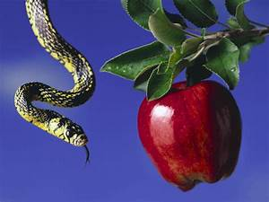 Apple And Snake | Free Images at Clker.com - vector clip ...