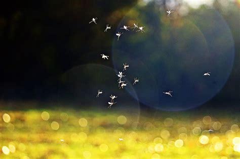 eliminare le formiche dal giardino come eliminare le zanzare dal giardino con la